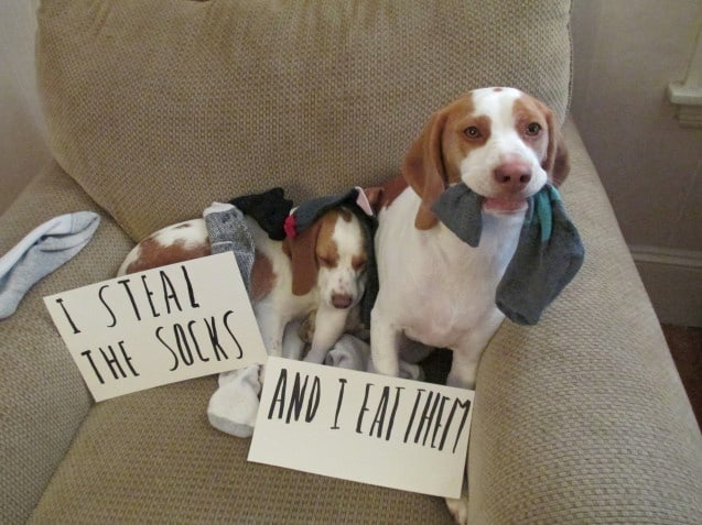 greatest dog shaming pictures