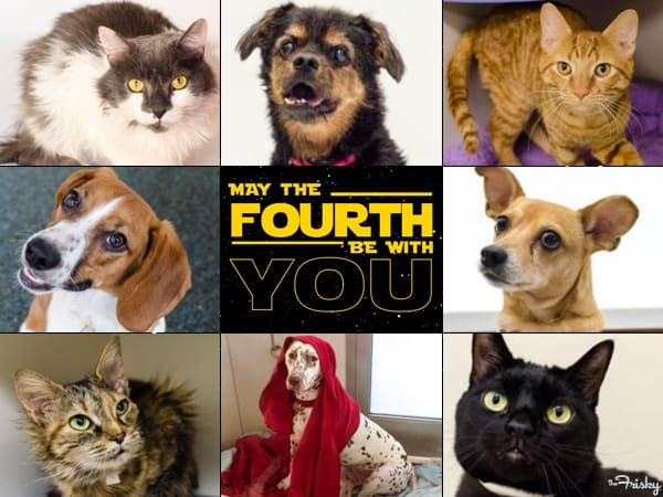 may the forth be with you dogs