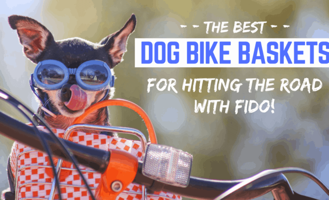 7 Best Dog Bike Baskets [2019 Reviews]: Safe Bicycle Riding