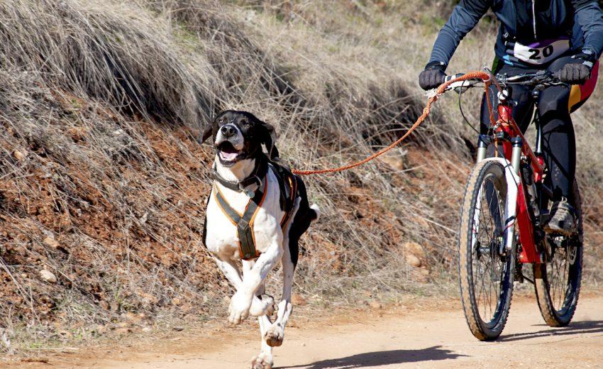 dog-bikejoring