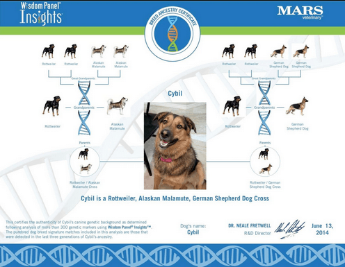 Dog Dna Tests Overview Explanation And Kit Reviews