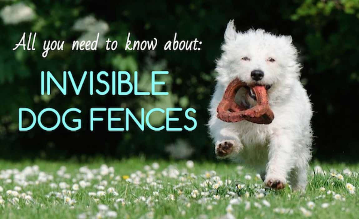 7 Best Invisible Dog Fences: In-Ground vs  Wireless vs