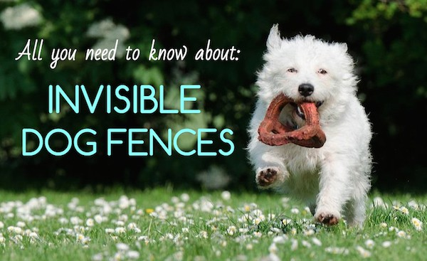 7 Best Invisible Dog Fences In Ground Vs Wireless Vs