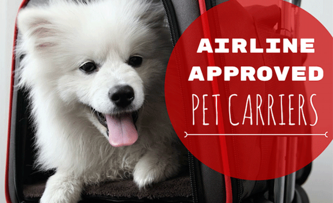 8 Best Airline Approved Pet Carriers (For In-Cabin Flights)