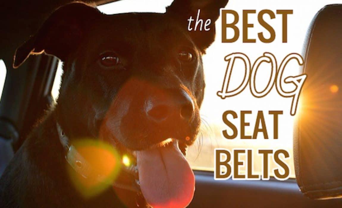 Best Dog Seat Belt >> 4 Best Dog Seat Belts Car Safety For Canines