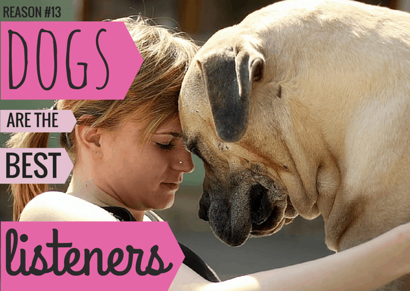 14 Dog Sayings: Photo Quotes About Why We Love Dogs