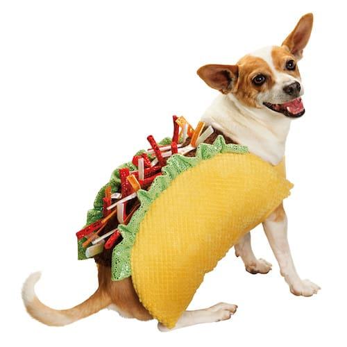 taco dog halloween costume - Dogs With Halloween Costumes On