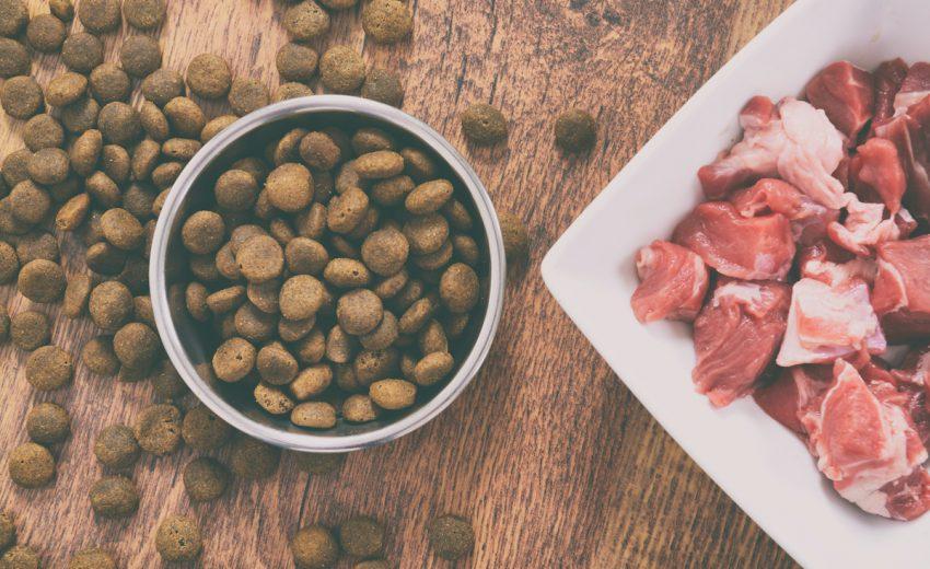 best holistic dog food