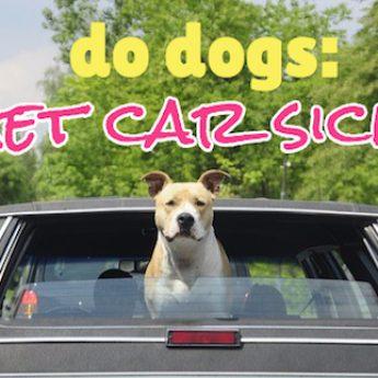 do dogs get car sick?