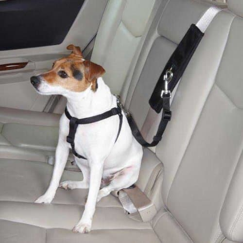 4 Best Dog Seat Belts Car Safety For Canines