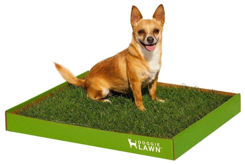 Fresh Patch + Alternative Grass Dog Pee Pads Review