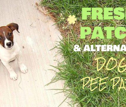 fresh patch alternative