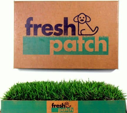 fresh patch review