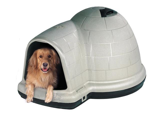 igloo dog house
