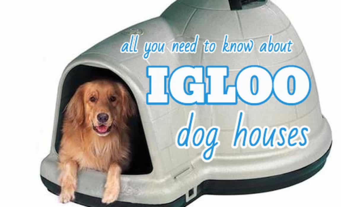 Igloo Dog Houses: Why Dogs Love Them + Our Top Picks