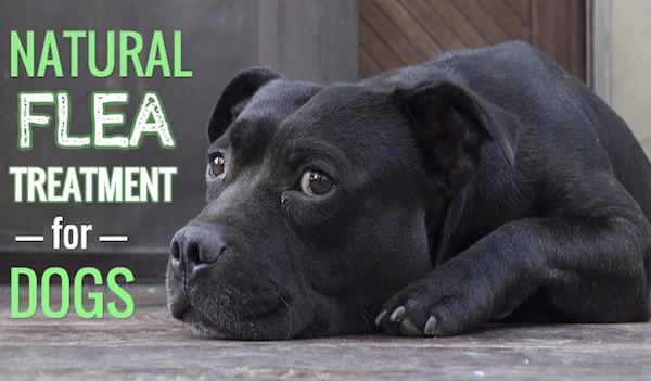 Natural Flea Treatment For Dogs Smart Safe Treatments