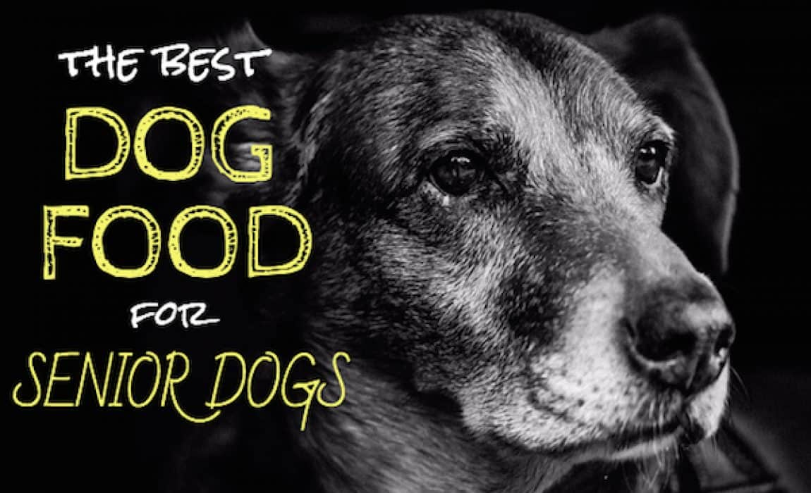 top dog food for senior dogs