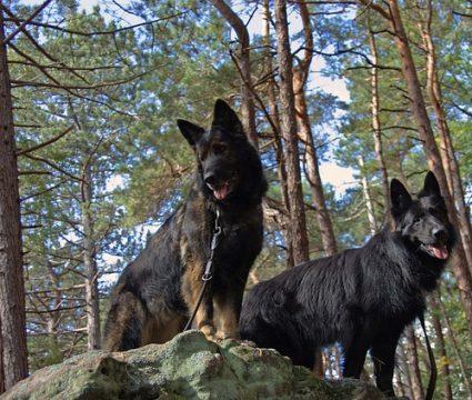 dog-hiking