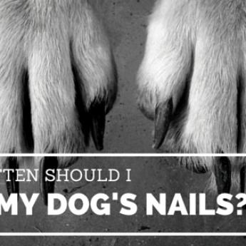 how often should I cut my dog