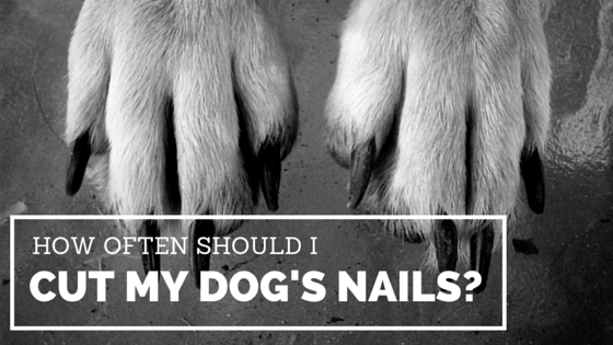 how to know where to cut dogs nails