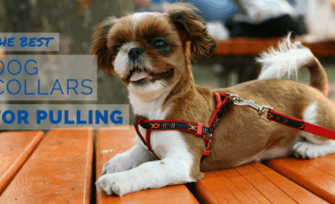 The Six Best Dog Collars For Pulling: Reclaim the Walk!