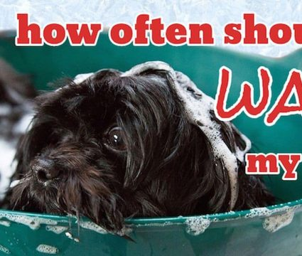 how-often-should-you-wash-your-dog