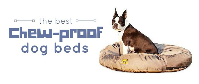 the best chew-proof dog beds