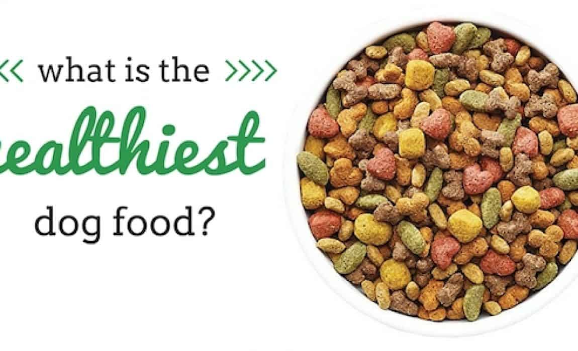 What Is The Healthiest Dog Food? Ingredients + Top Brands