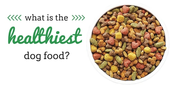 What Is The Healthiest Dog Food Ingredients Top Brands