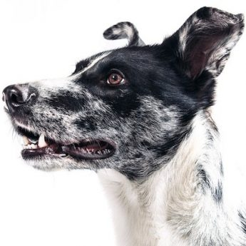 recommended dog training books