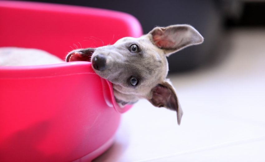chewproof-dog-beds