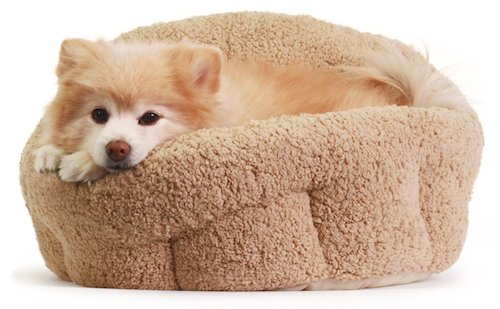 6 Best Dog Beds For Small Dogs [2018 Reviews]: Petite