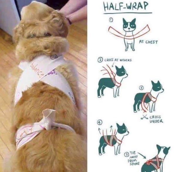 Diy Thundershirt How To Make Your Own Canine Anxiety Wrap