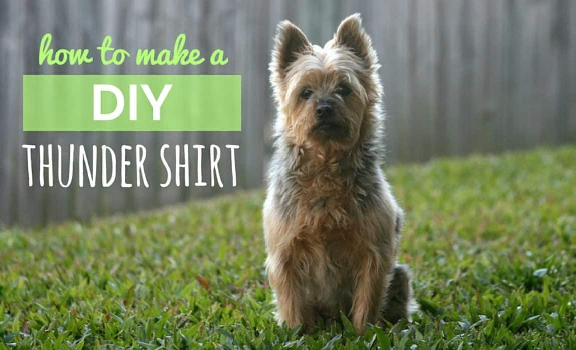 DIY Thundershirt: How to Make Your Own Canine Anxiety Wrap