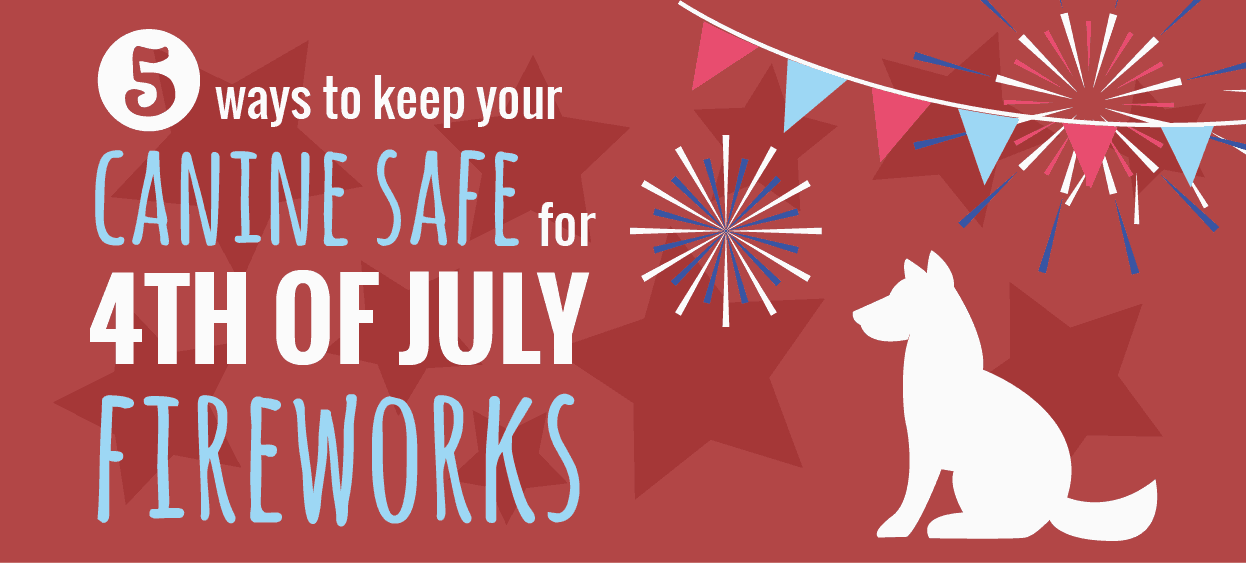 how to keep your dog calm during fireworks on the 4th of july  infographic