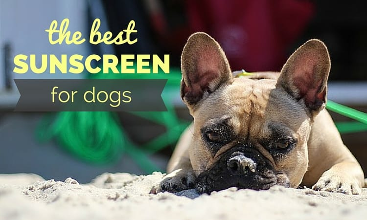 best sunscreen for dogs