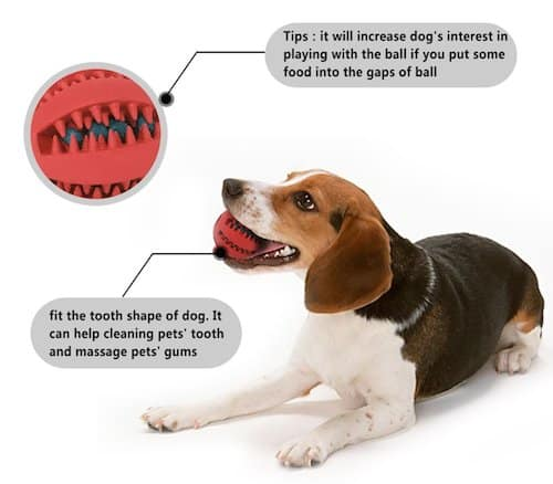 What Can You Do For Dog S Bad Breath