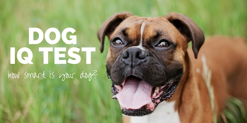 Take Our Dog IQ Test: How Smart Is Your Pup?