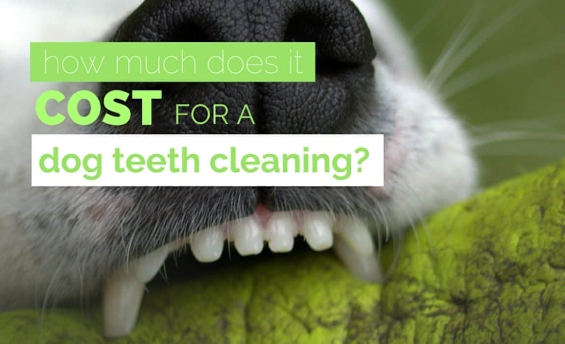 How Much Does Dog Teeth Cleaning Cost? Average Pricing & Costs