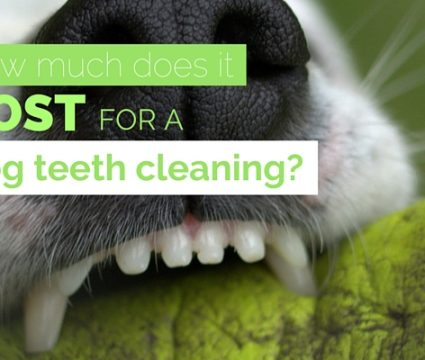 dog teeth cleaning cost