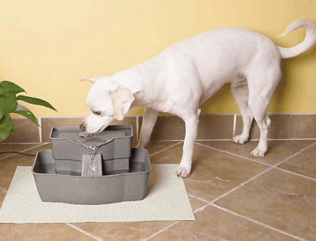 6 Best Dog Water Fountains Keep Your Dog Drinking Amp Hydrated
