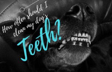 how often should I brush my dog's teeth