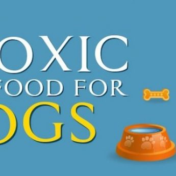 toxic foods cover