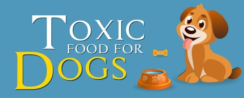 What Can My Dog Eat Safe Vs Toxic Food For Dogs
