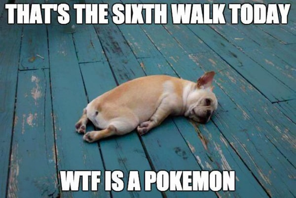 pokemon go dogs