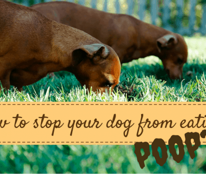 how to stop my dog from eating poop