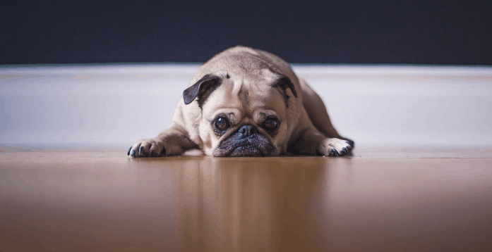 Do Dogs Get Hiccups Learn Why It Happens How To Fix It