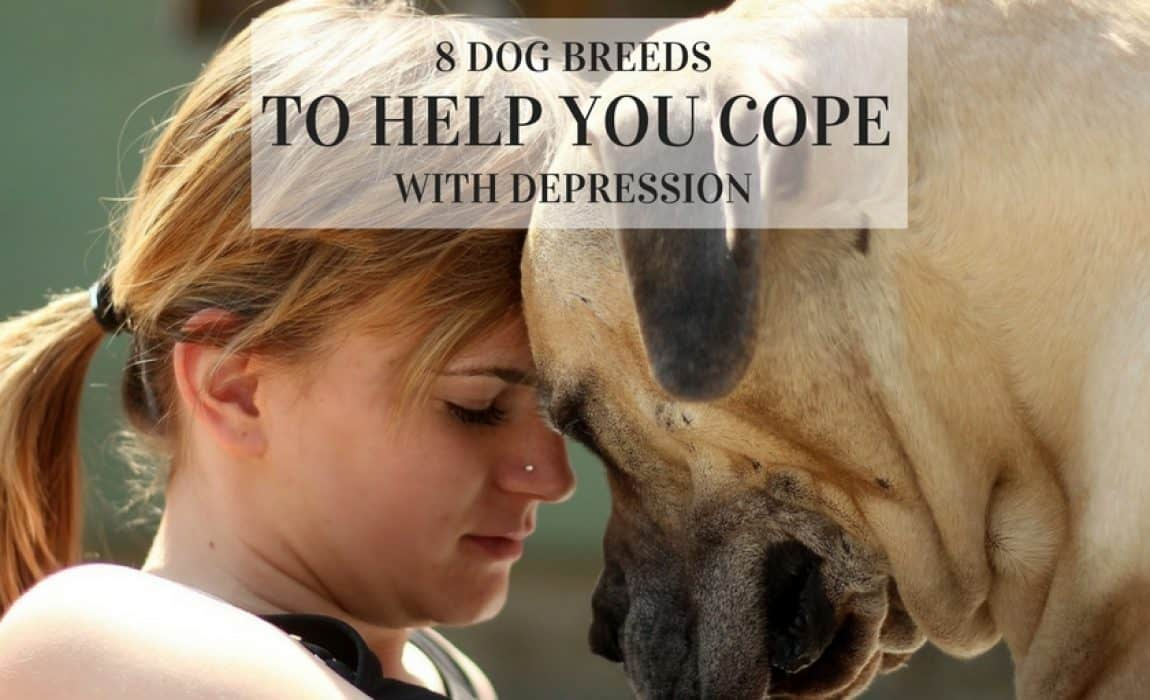 8 Best Dogs For Depression Canines To Help Cope When You Re Down