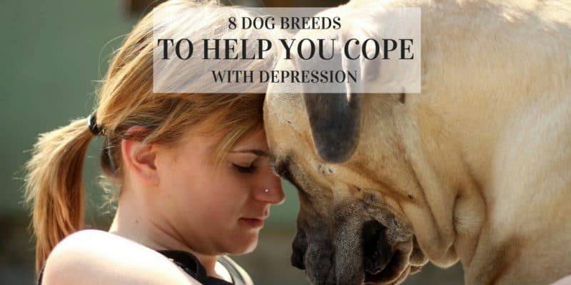 best dogs for depression