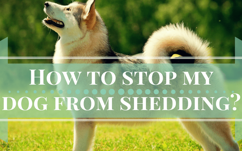 shedding dog that stop sheds saved marriage simple ways dogs before starts pin reduce the my to how prevent it